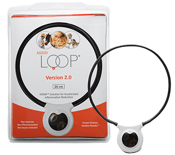 Reduce Pain and Inflammation in Horses With Assisi Loop 2.0
