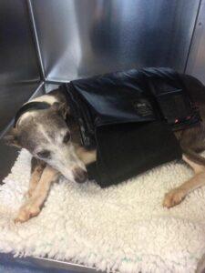 Epiony dog pad