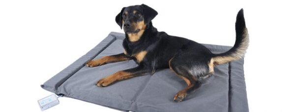 Respond dog beds